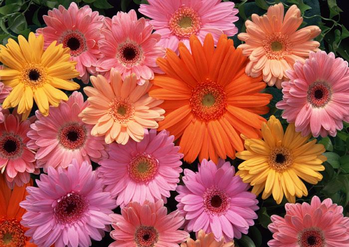 Название: flowers112.jpg Просмотров: 431  Размер: 118.0 Кб
